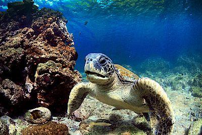 Ecuador Individualreise - Der Schatz von Galapagos